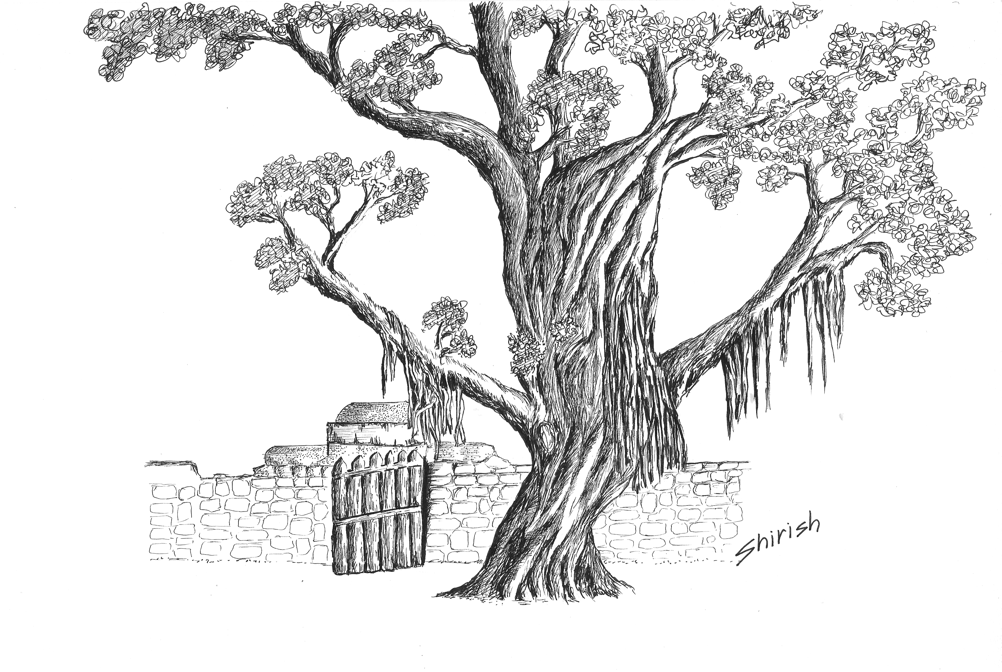 Uncategorized How To Draw A Perfect Tree banyan tree hues and tones tree